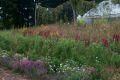 Flower garden at Canterbury