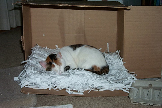 cat asleep on shredded paper in a cardboard box