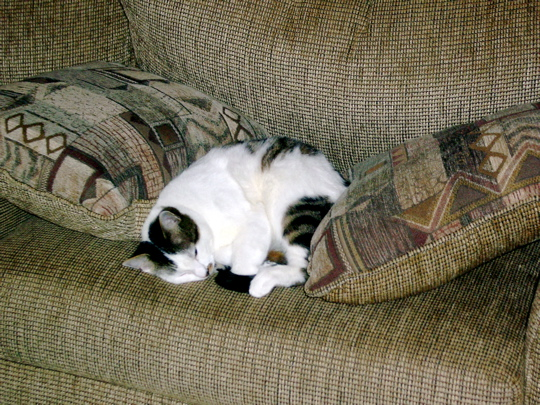 cat lying asleep between two pillows