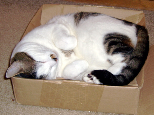 cat curled on back in box with paws curled