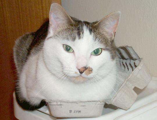 big cat in a little egg carton