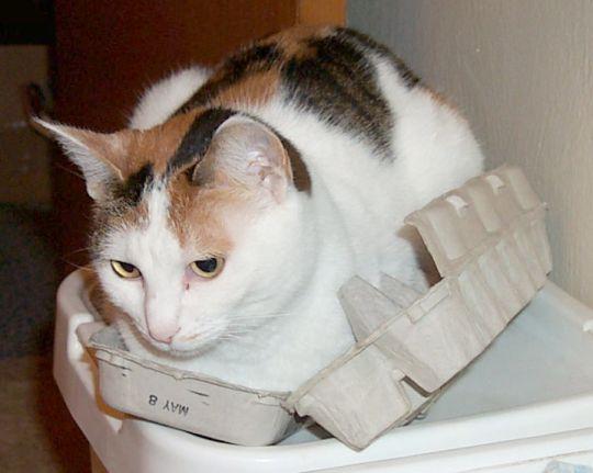 slightly smaller cat in same egg carton