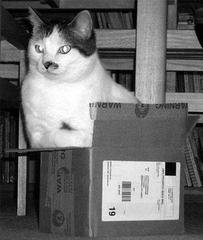 big cat in small box