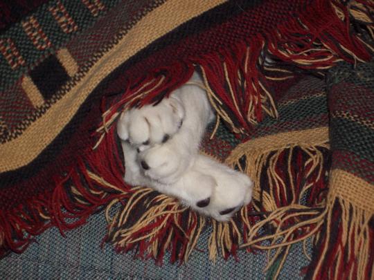 three white paws peeking