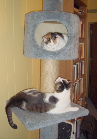 cats.  cute ones.