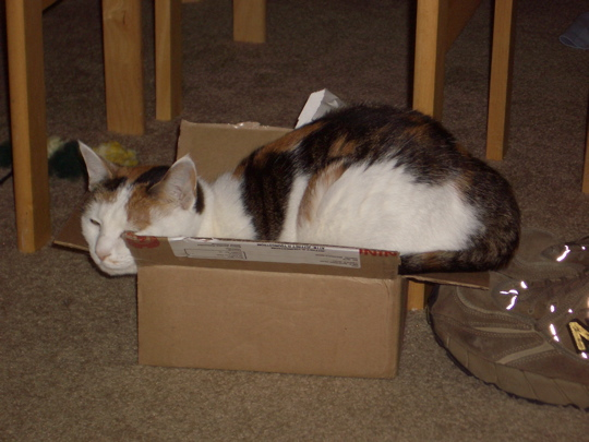 small cat in smaller box. Alice is a tiny little cat, but she is still
