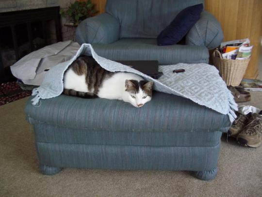 cat050211.jpg