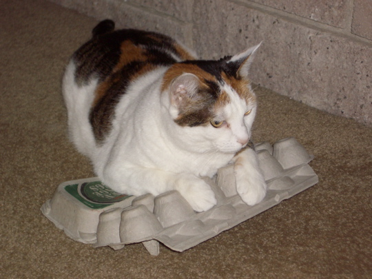 cat on inverted egg carton
