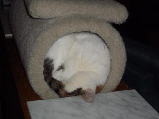 cat plugs tunnel