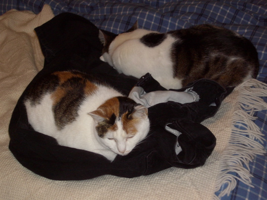 two mostly white cats on clean black jeans