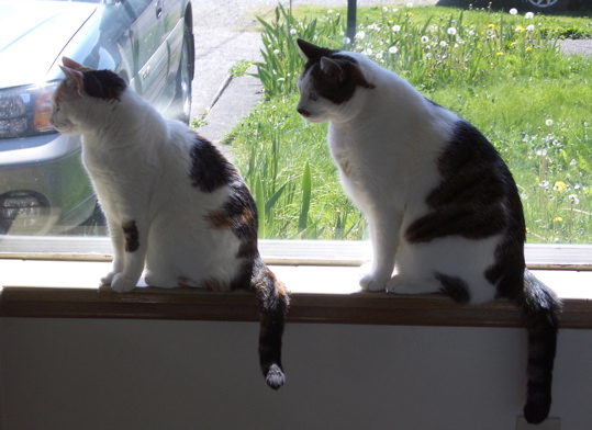 Two seated cats in a window looking to your left