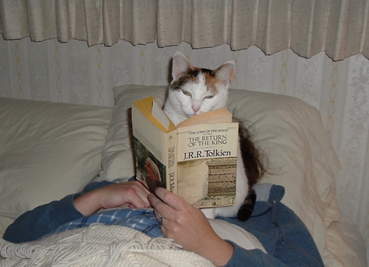 cat reading Return of the King