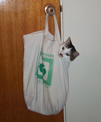 cat in cloth grocery bag hanging from doorknob