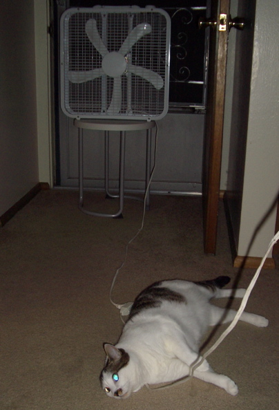 cat lying in front of box fan