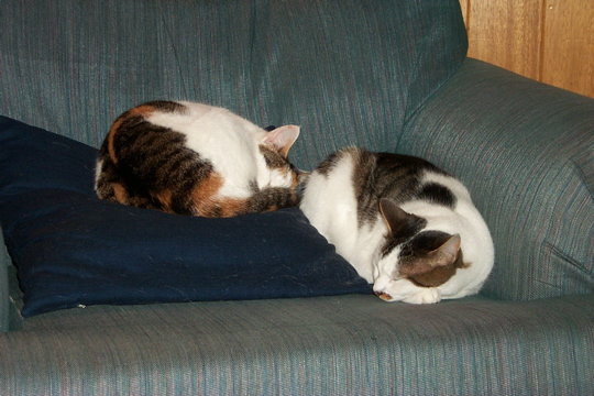 cat on chair next to cat on cushion on chair