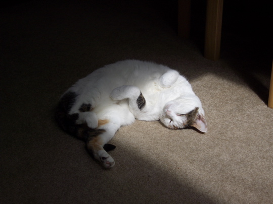 cat sprawled in sunshine