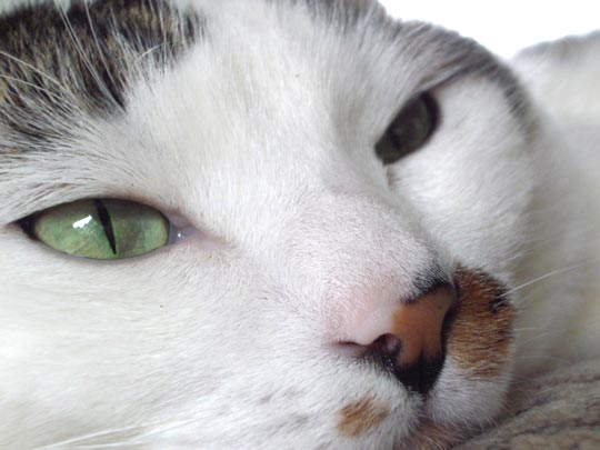 extreme closeup of Theo's face showing slit-pupiled green eyes
