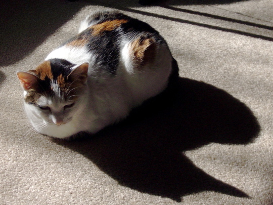 kitty with feet curled under casting shadow in the sun
