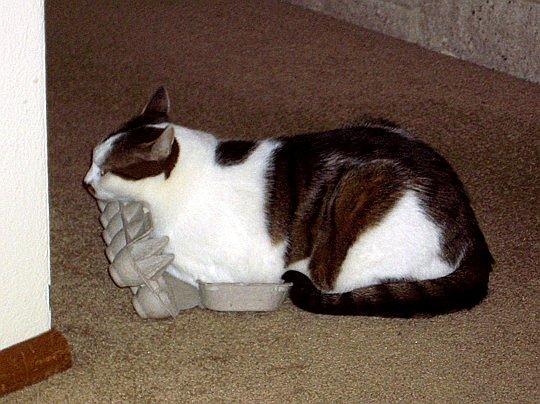 cat sitting in egg carton