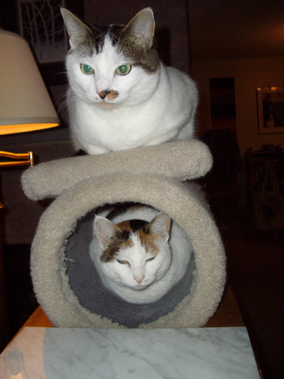 cat tunnel with cat inside and cat on top