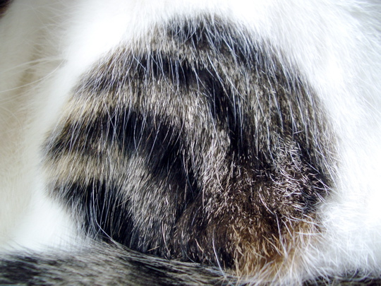 cat050812.jpg