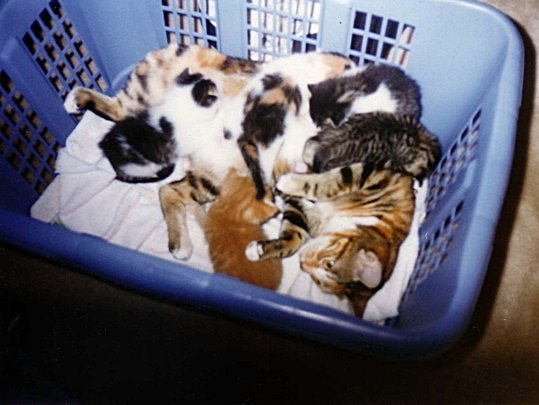 laundry basket full of kittens piling on their mother