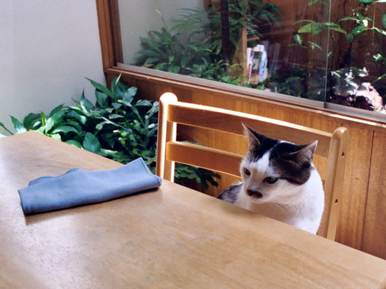 cat sitting on chair at dining room table