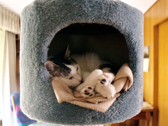 cat curled up in a cat tree