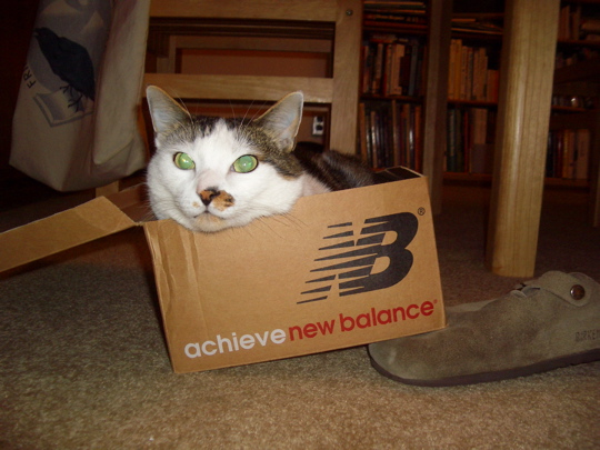 cat in a shoe box