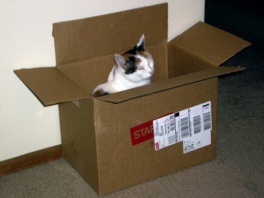 cat dozing upright in a shipping box. Late again.
