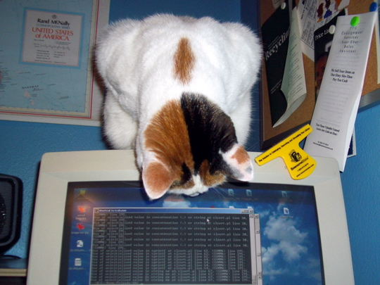cat peering intently upside down at windows mouse pointer