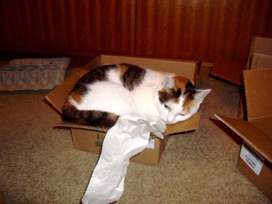 cat051230b.jpg