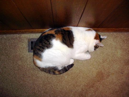 cat051230c.jpg