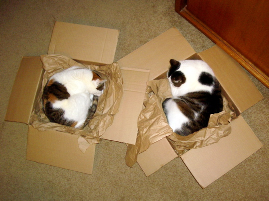 two cats in two boxes