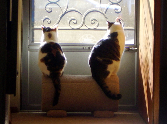 two cats sitting on opposite ends of a carpeted tunnel so as to see out a screen door to a sunny day
