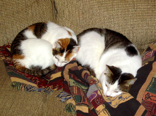 two cats curled on a couch