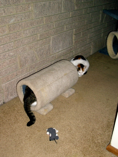 cat with tail trailing out of tunnel toy while other cat looks on