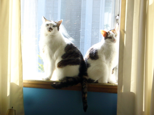 two cats sitting back to back on a sunny windowsill
