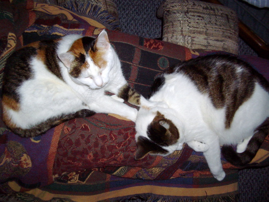 cat shoving on other cat's neck