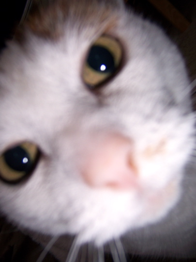 Cat way too close to the lens