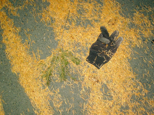 black canvas work glove in amongst wind-blown pine needles and a branch