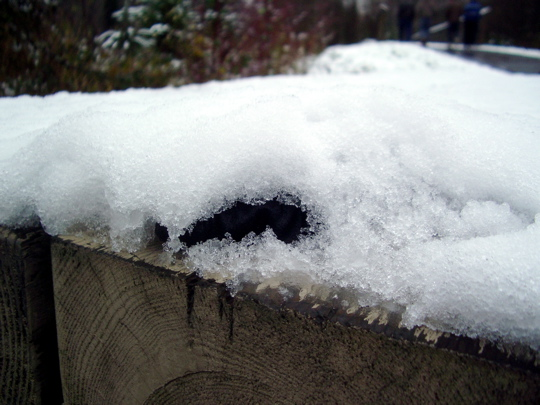 tiny patch of black glove looking out from under a layer of snow