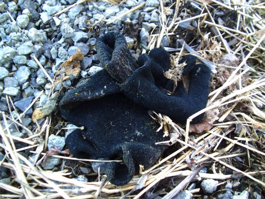 pair of black knit gloves entwined and surrounded by gravel and dead grass