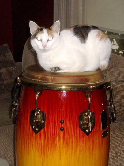 Alice sitting atop a colorful conga drum
