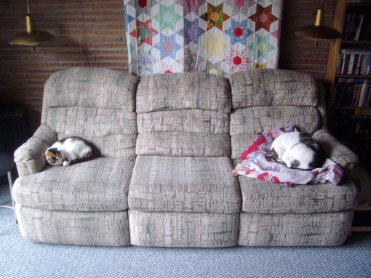 Cats curled at opposite ends of a couch