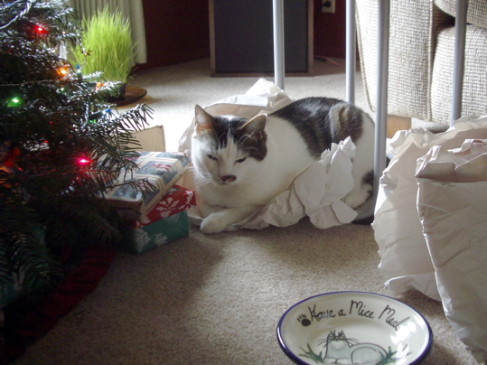 cat on paper by xmas tree