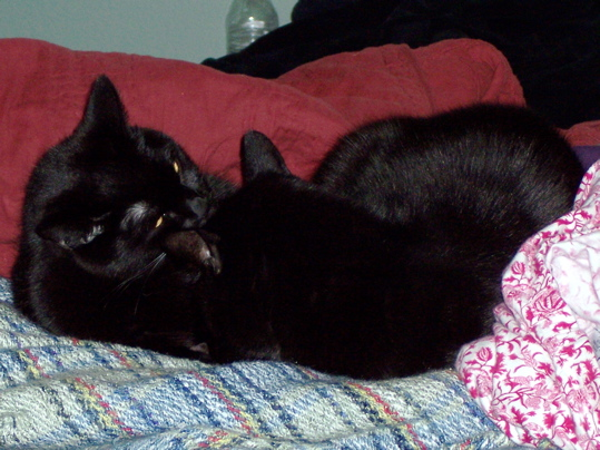 Two black cats cuddling on a blanket