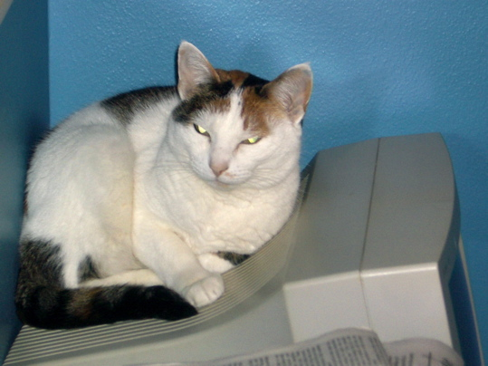Cat curled on a computer monitor
