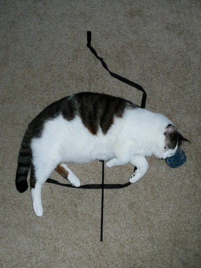cat lying on black ribbon and stick with brush for a pillow