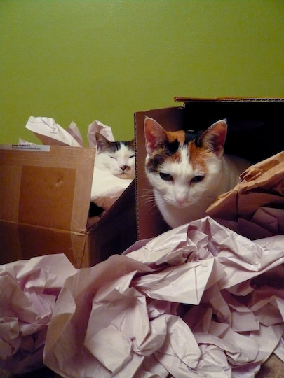 cats lounging in crumpled paper and cardboard boxes